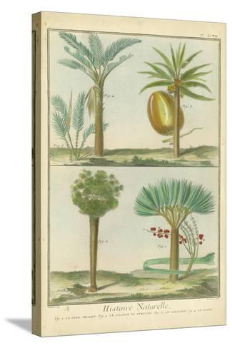 Histoire Naturelle Tropicals I-Martinet-Stretched Canvas Print