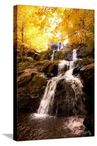 Waterfall in Autumn-Lantern Press-Stretched Canvas Print