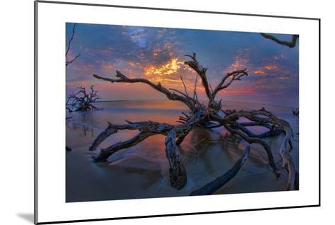 Driftwood and Sunset-Lantern Press-Mounted Art Print