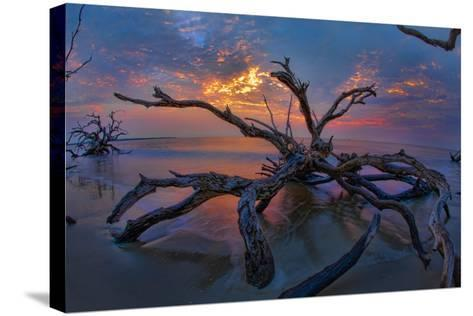 Driftwood and Sunset-Lantern Press-Stretched Canvas Print