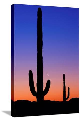 Cactus and Moon-Lantern Press-Stretched Canvas Print