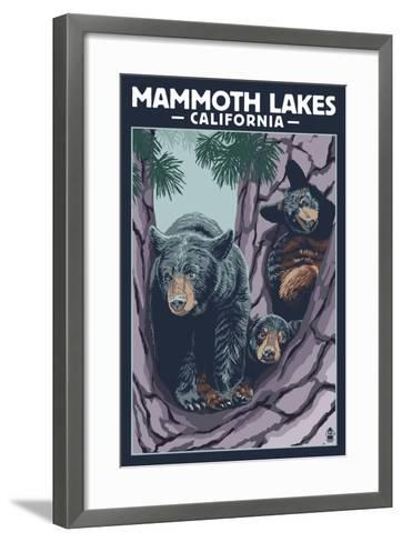 Mammoth Mountain, California - Black Bear and Cubs in Tree-Lantern Press-Framed Art Print