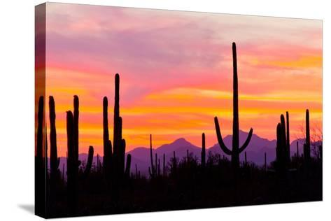 Sunset and Cactus Photograph-Lantern Press-Stretched Canvas Print