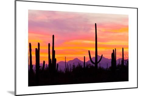 Sunset and Cactus Photograph-Lantern Press-Mounted Art Print