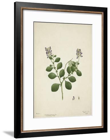 Crotolaria Verrueosa Linn, 1800-10--Framed Art Print