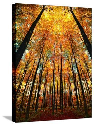 Cathedral Fall-Philippe Sainte-Laudy-Stretched Canvas Print