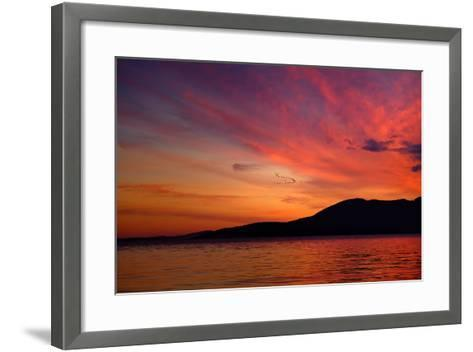 Sunset Birds-Ursula Abresch-Framed Art Print