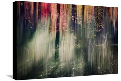 Spring Light-Ursula Abresch-Stretched Canvas Print
