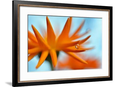 Sprawling Orange-Heidi Westum-Framed Art Print