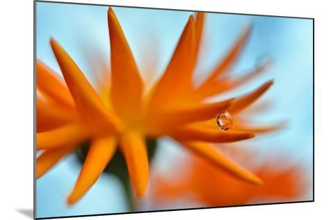 Sprawling Orange-Heidi Westum-Mounted Photographic Print