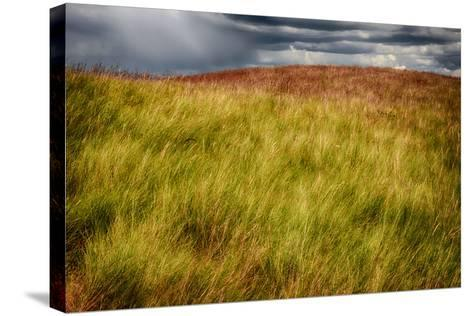 Grasses on a Stormy Day-Ursula Abresch-Stretched Canvas Print