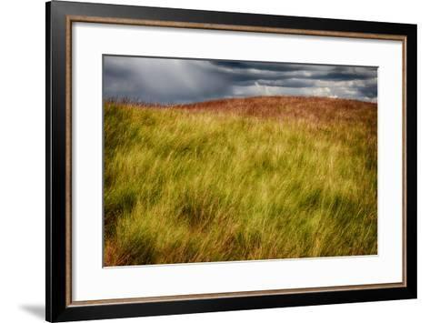 Grasses on a Stormy Day-Ursula Abresch-Framed Art Print