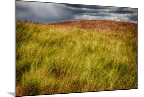 Grasses on a Stormy Day-Ursula Abresch-Mounted Photographic Print