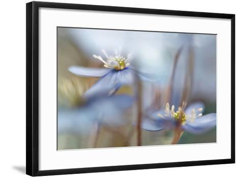 Between the Stalks-Heidi Westum-Framed Art Print