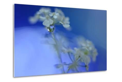 Feeling the Blue Waves-Heidi Westum-Metal Print