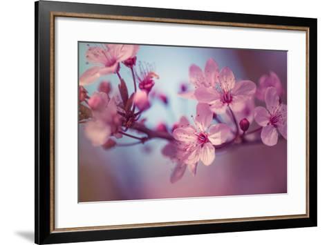 Cherry Blossums 1-Philippe Sainte-Laudy-Framed Art Print