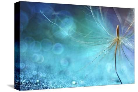 Dancing on the Sea Floor-Heidi Westum-Stretched Canvas Print