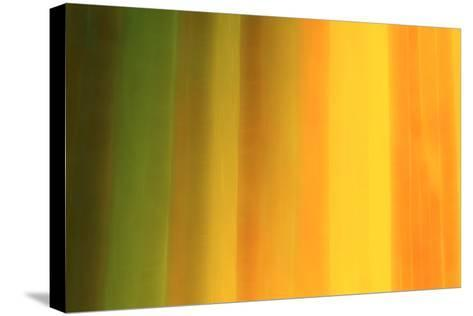 Warm Tonality-Marco Carmassi-Stretched Canvas Print