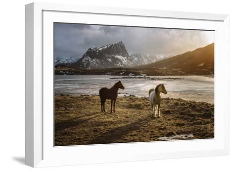 Lofoten Horses-Marco Carmassi-Framed Art Print