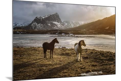 Lofoten Horses-Marco Carmassi-Mounted Photographic Print