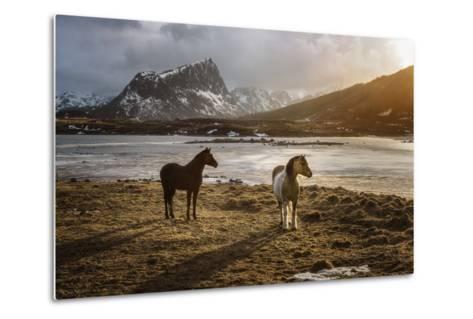 Lofoten Horses-Marco Carmassi-Metal Print