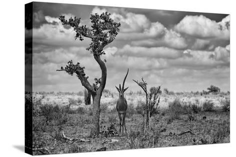 The Last Unicorn-Marcel Rebro-Stretched Canvas Print
