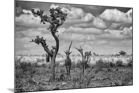 The Last Unicorn-Marcel Rebro-Mounted Photographic Print