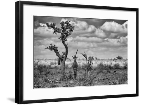 The Last Unicorn-Marcel Rebro-Framed Art Print