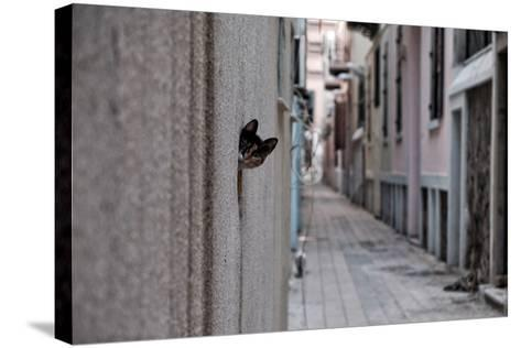 Dantel Street Cat-Ali Ayer-Stretched Canvas Print