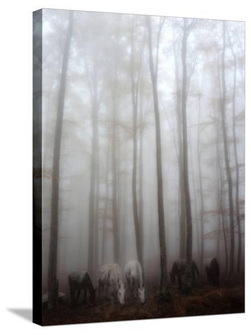 Fog-Francesco Martini-Stretched Canvas Print