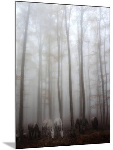 Fog-Francesco Martini-Mounted Photographic Print