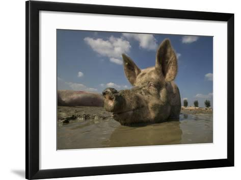 No Stress-Gert Van Den-Framed Art Print