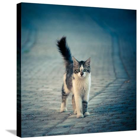 Little One-Dejan Ilijic-Stretched Canvas Print