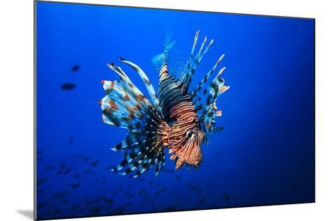 Lionfish-Barathieu Gabriel-Mounted Photographic Print