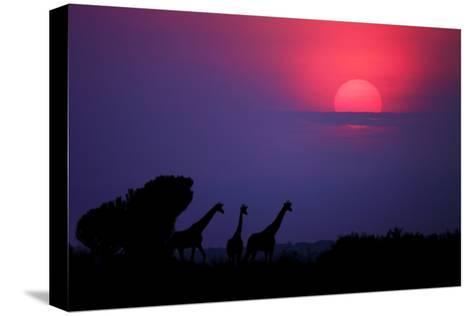 Sunrise in Uganda-Nicolás Merino-Stretched Canvas Print