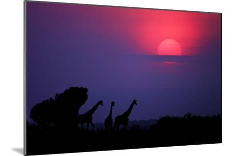 Sunrise in Uganda-Nicolás Merino-Mounted Photographic Print