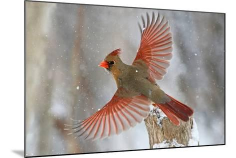 Snow Storm-Mircea Costina-Mounted Photographic Print