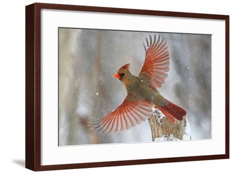 Snow Storm-Mircea Costina-Framed Art Print