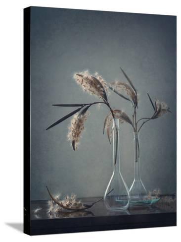 Untitled-Dimitar Lazarov --Stretched Canvas Print