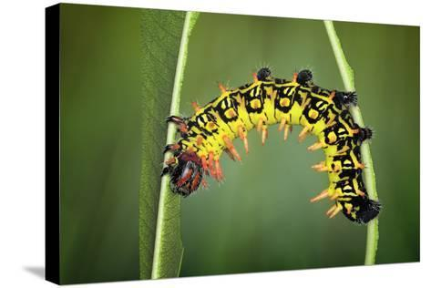 Balancing Act-Jimmy Hoffman-Stretched Canvas Print