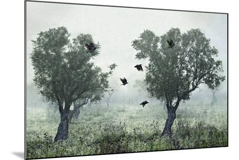 Crows in the Mist-S. Amer-Mounted Photographic Print