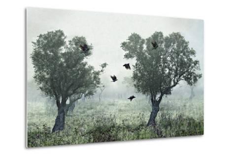 Crows in the Mist-S. Amer-Metal Print