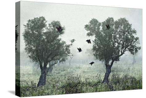 Crows in the Mist-S. Amer-Stretched Canvas Print