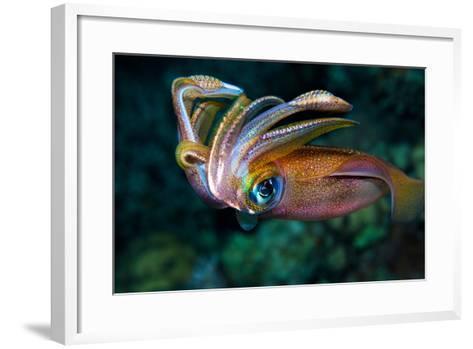 Squid-Anna Shvab-Framed Art Print