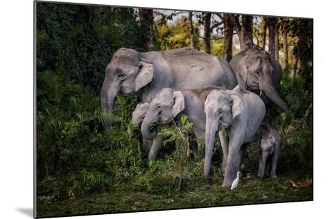 Tasty Leaves-Pavol Stranak-Mounted Photographic Print