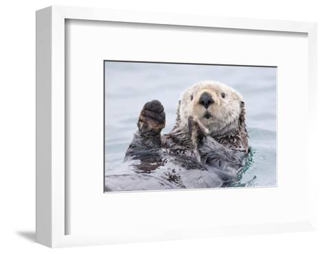 Yesterday I Caught a Fish Thiiis Big! - Otter. Alaska-Roman Golubenko-Framed Art Print