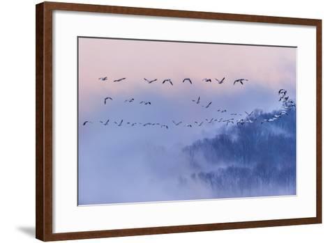 Snow Geese-Austin Li-Framed Art Print