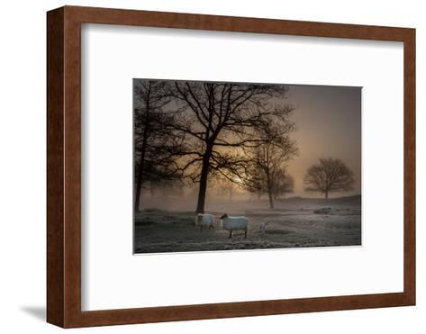 Foggy Morning-Piet Haaksma-Framed Art Print
