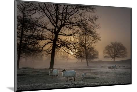 Foggy Morning-Piet Haaksma-Mounted Photographic Print