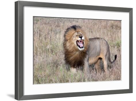 Lion-Alessandro Catta-Framed Art Print